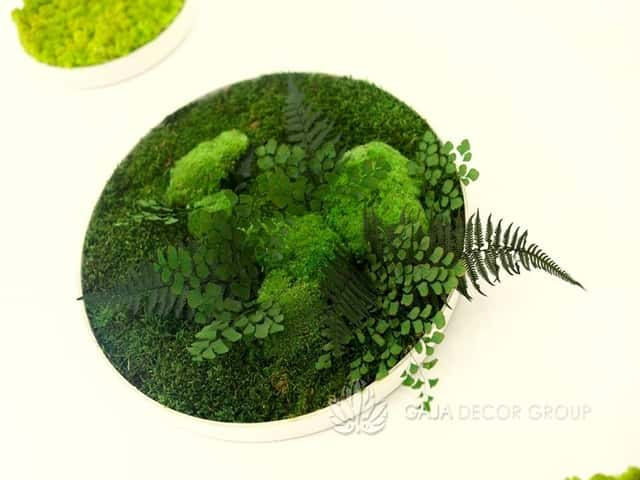 Moss frame decoration