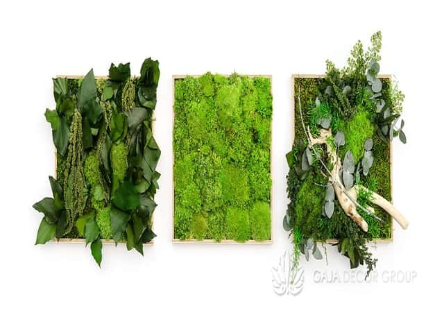 Moss frames decor