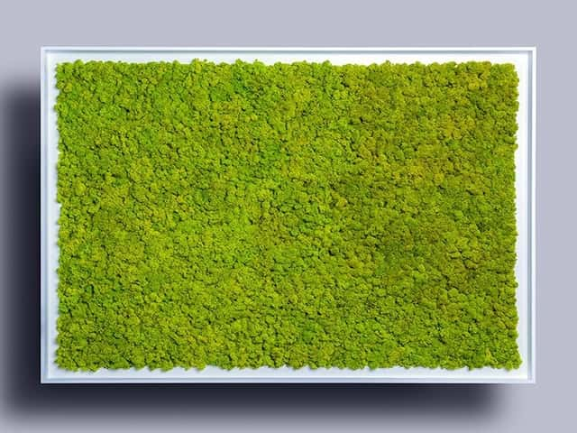 Moss in white frame