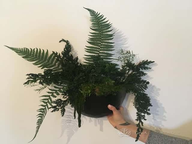 Stabilized plant for decor