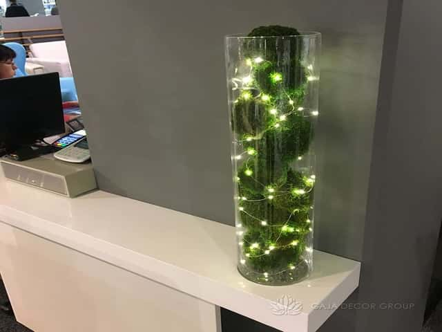 Stabilized plants in glass vase