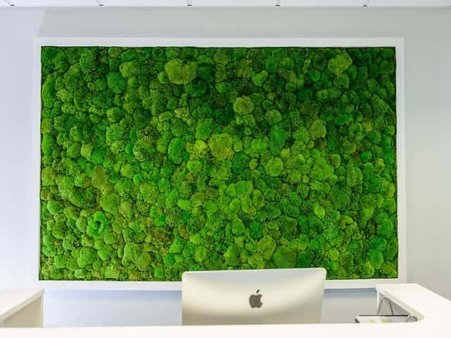 Pole moss wall in the office