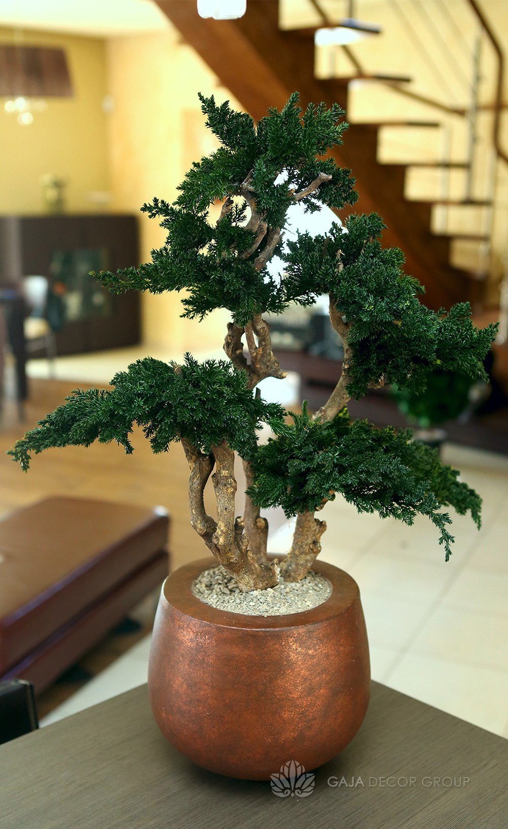 Indoor bonsai tree gaja decor group for Bonsai indoor