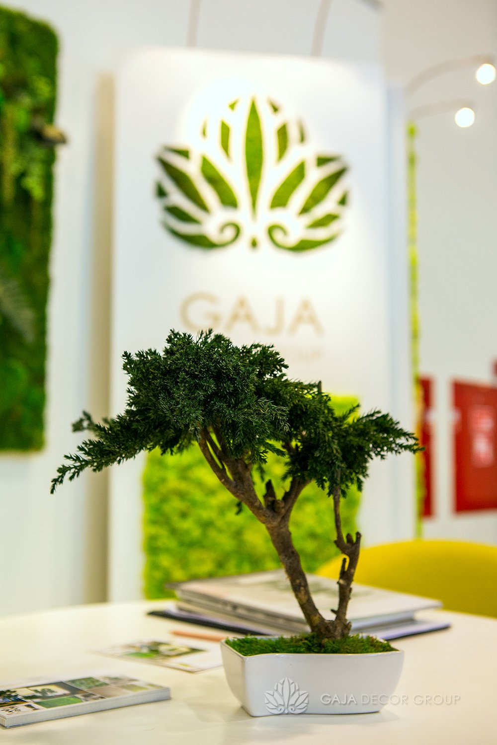 Mini Bonsai Tree Gaja Decor Group
