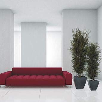 Interior trees for home