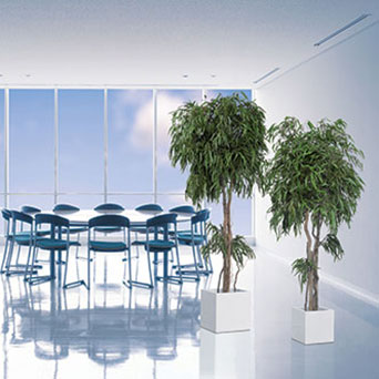 Interior trees for office
