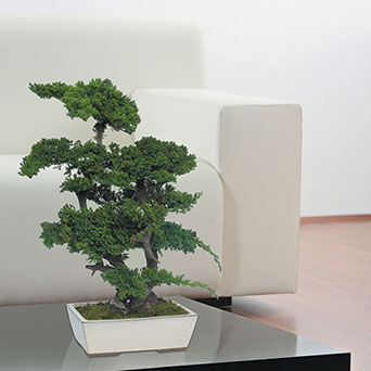 Tree for interior design