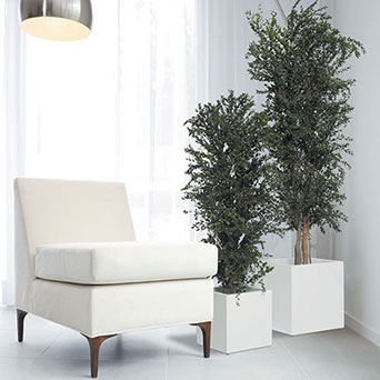 Trees for interior decoration