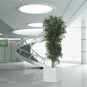 Trees to company's interior