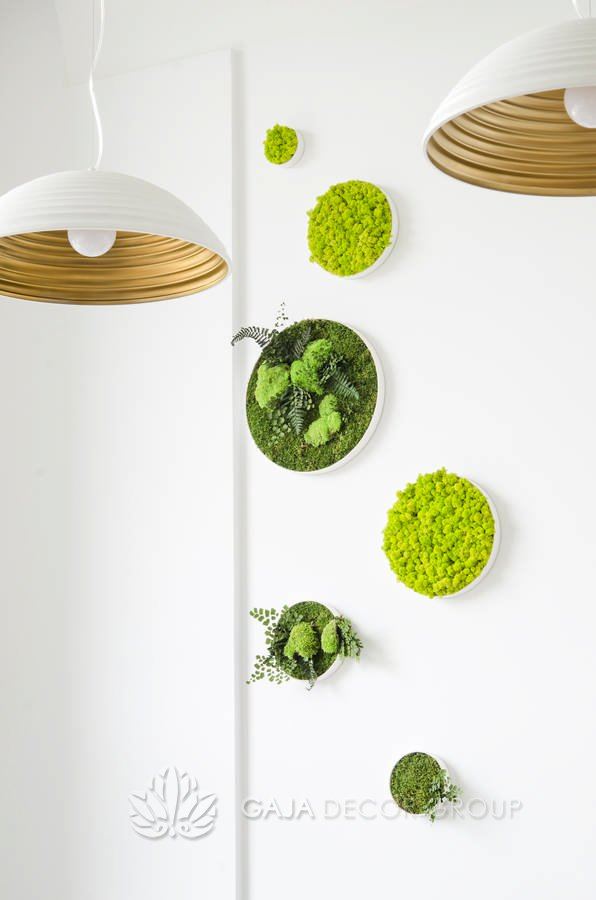 Scandinavian moss and plant composition on wall