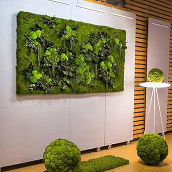 Scandinavian moss and plant picture
