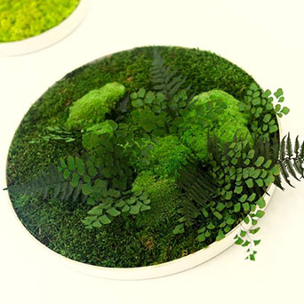 Scandinavian moss and plant pictures placed in the frames