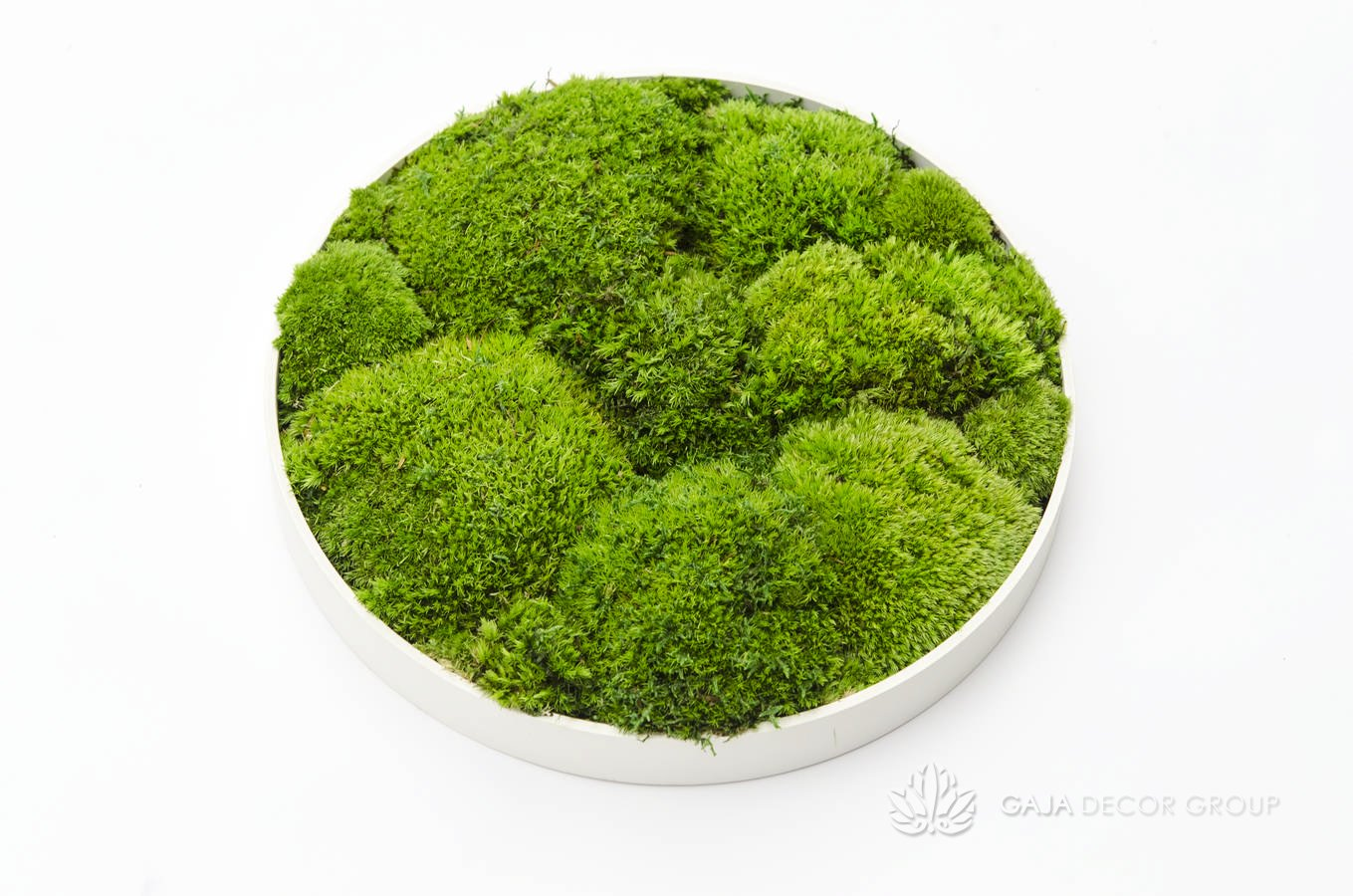Scandinavian moss with bunches pictures