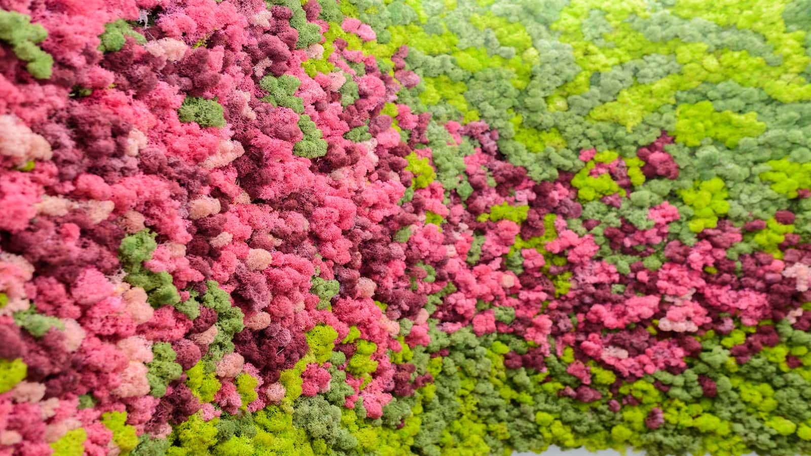 Stylish colorful reindeer moss